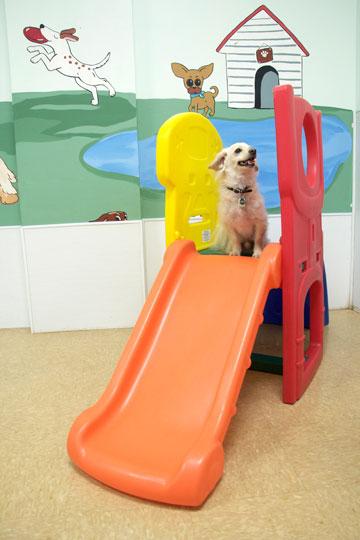 Dog having fun in doggie daycare at BVC.