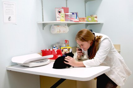 Veterinarian performing a wellness exam on a cat.