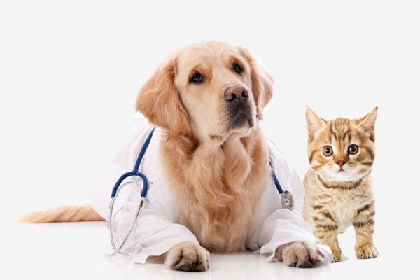 Dog dressed as an internal medicine doctor