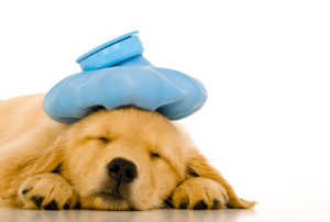 Picture of a sick puppy.
